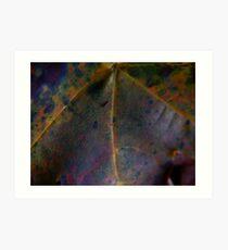 Rainbow Leaf (8033) Art Print