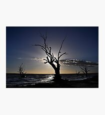 River Red Gums Photographic Print