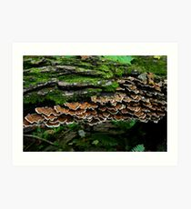 Shelf Fungus Art Print