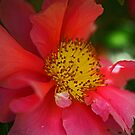 Pink Camellia by Sea-Change