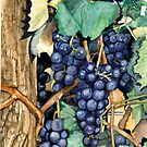Grapes Ready To Harvest by clotheslineart