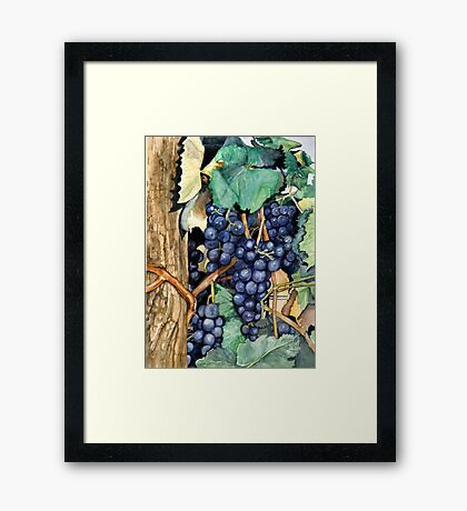Grapes Ready To Harvest Framed Print