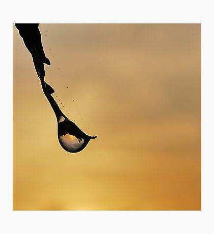 Dew Drop Sunrise Photographic Print
