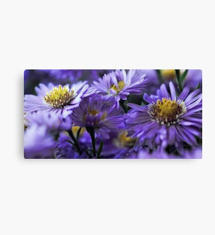 -New England Fall Asters Canvas Print