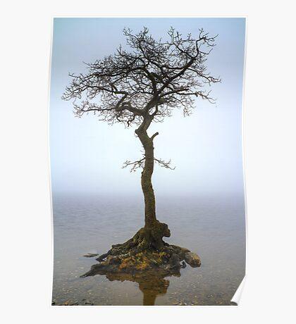 Milarrochy Tree (3) Poster