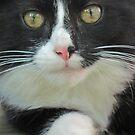 Kitty Kat-Kitty Kat, I Love You by teresa731