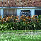 Barn and flowere by cherylc1