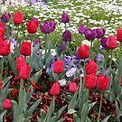 A Dash of Colour - Floriade 2011 by Kelly Robinson