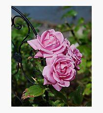 Autumn Roses Photographic Print