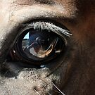 Glass Eye by marycarnahan