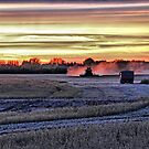 Evening Harvest by Vickie Emms