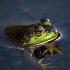 Little Frog by Pamela O'Pecko