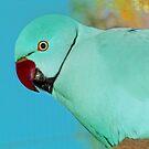 """Blue, Indian Ringneck"" - Peel Zoo, Western Australia. by Toni Kane"