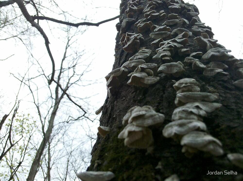 Fungus Stairwell by Jordan Selha
