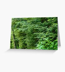 Reaching from the Forest Greeting Card
