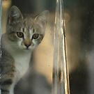 Lana (Miss Kitty's Sister) by Kelly Chiara