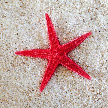 Starfish by markku