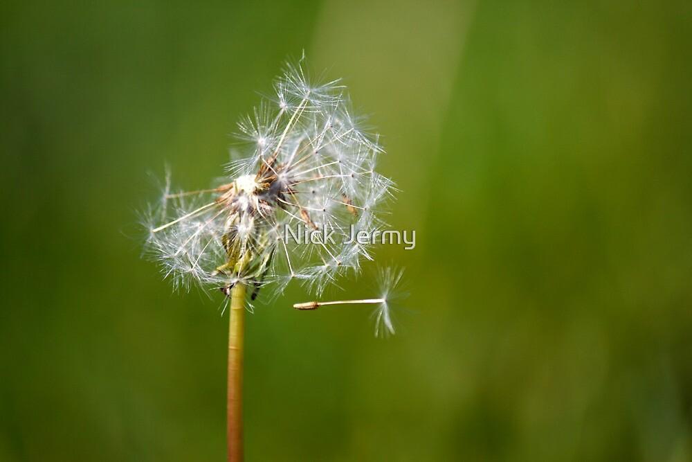 Dandelion by Nick Jermy