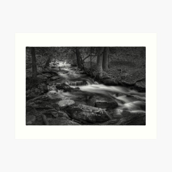 Pond Run Creek Art Print