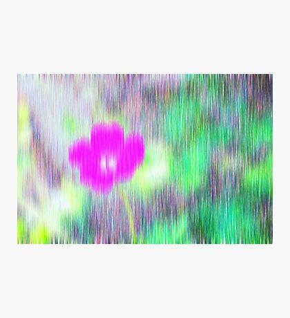 Flower in the rain Photographic Print