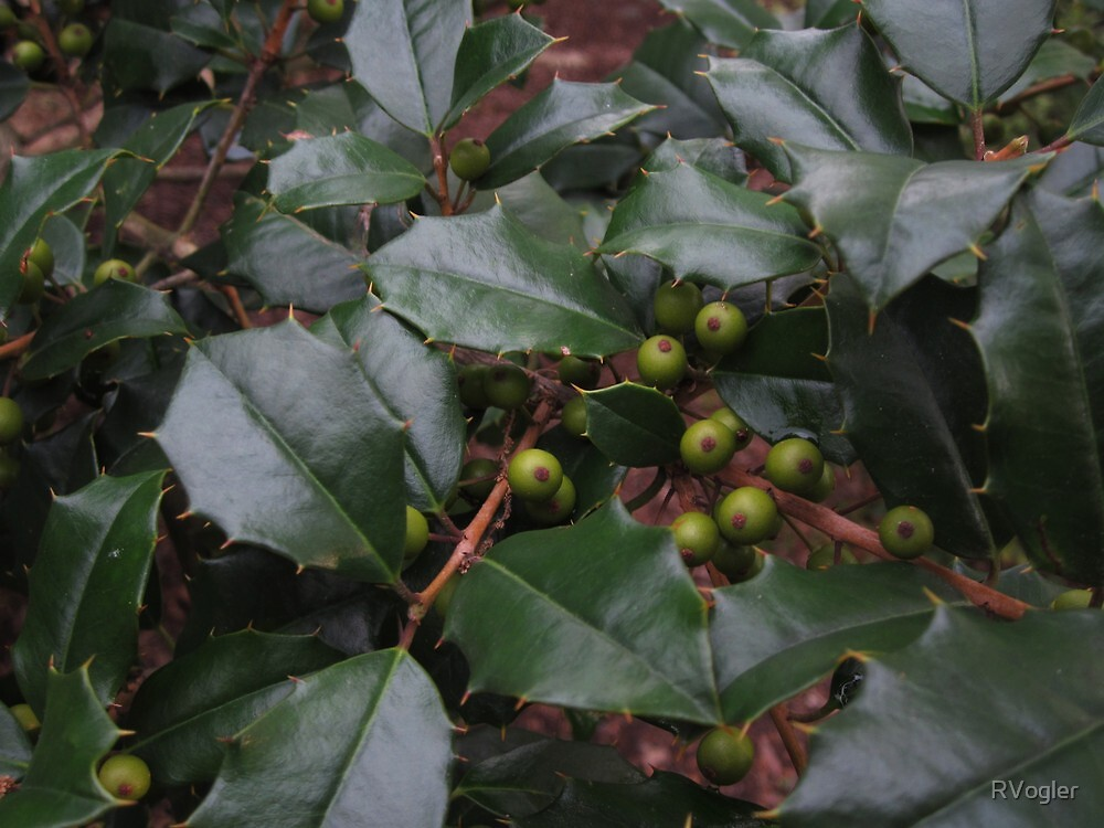 Early Berries by RVogler