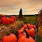 It's Harvest Time! $20 Voucher Challenge