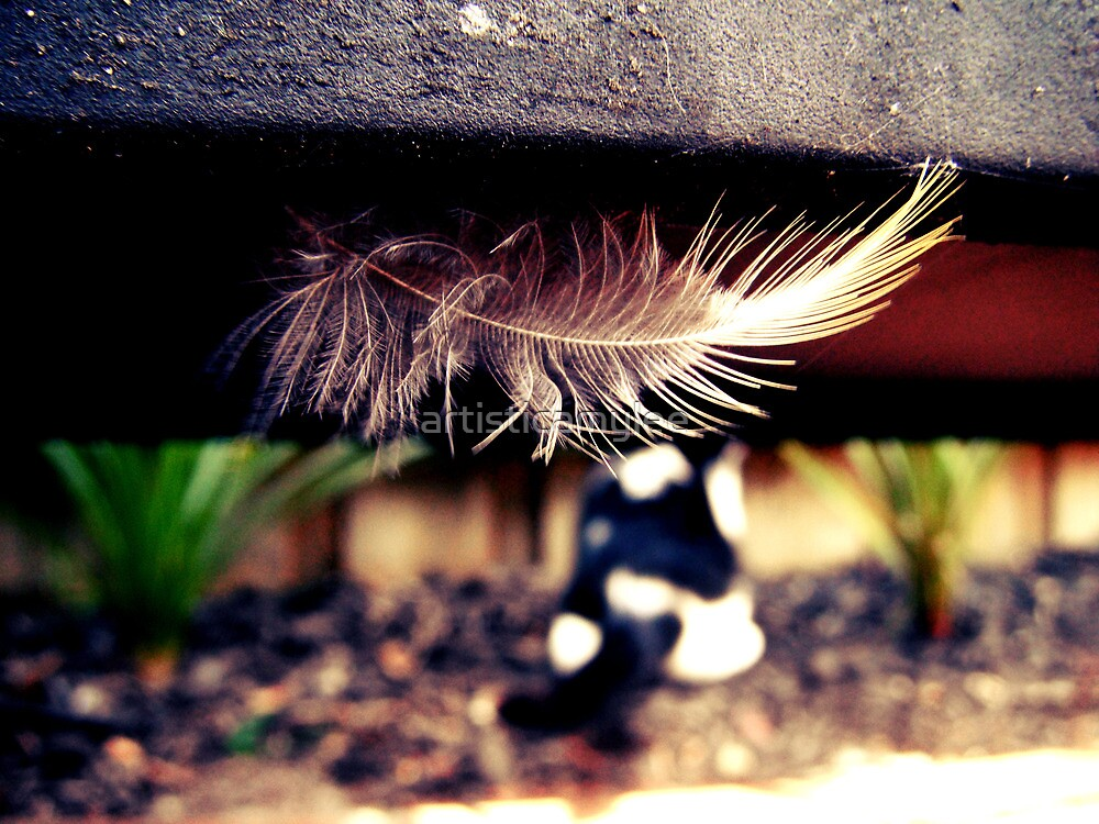 The Cat and The Feather by Amy-lee Foley