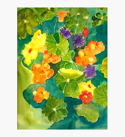 Nasturtiums I Have Known and Loved Photographic Print