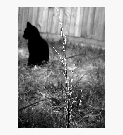 Pretty Black Cat Photographic Print