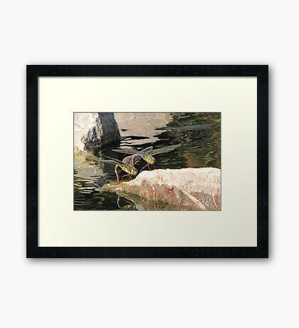 Dragonfly~ Common Green Darner (Copulating) Framed Print