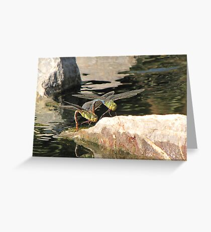 Dragonfly~ Common Green Darner (Copulating) Greeting Card