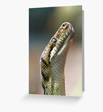 Python Greeting Card