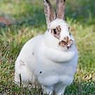 Bunny - This One's For U by DigitallyStill