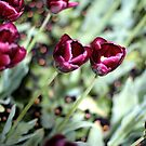 Purple flowers by Ashlee Betteridge