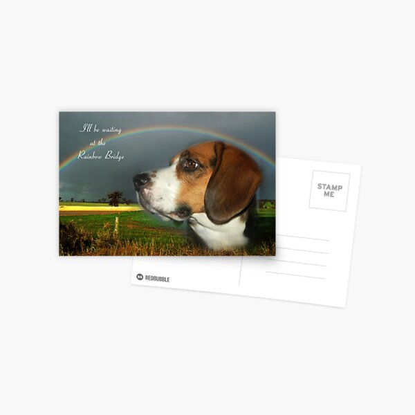 Sympathy Card For Loss Of Pet Postcard