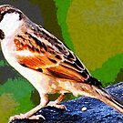 SPARROW by Terry Collett