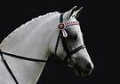 Grey Riding Pony by Jenny Brice