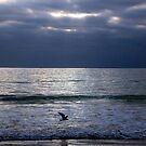 Cloudy Morning, Marion Bay by Asoka