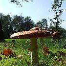Fungi by Chris Goodwin