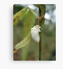 COTTONY CUSHION SCALE INSECT  Canvas Print