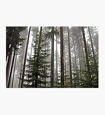 Foggy Forest Morning - Willamette National Forest Photographic Print