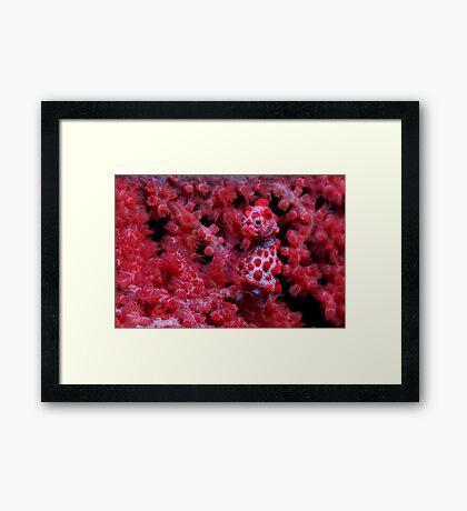 Red Nose Framed Print
