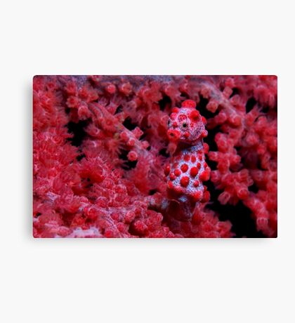 Red Nose Canvas Print