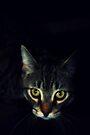 Night Stalker by jodi payne
