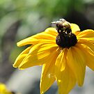 Bumble Bee by vkatelynng