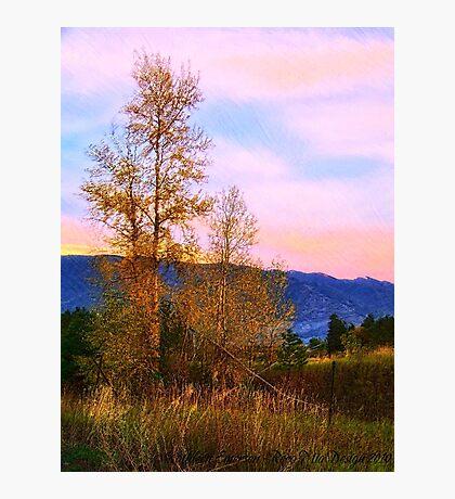 Gradual Autumn Photographic Print