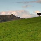 High on the Hill by MickHay