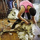 CONTRAST OF SHEARING WORLDS by Helen Akerstrom Photography