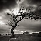 Dog Rock Tree by Christine Wilson