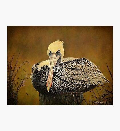 Brown Pelican Relaxing - Textures Photographic Print